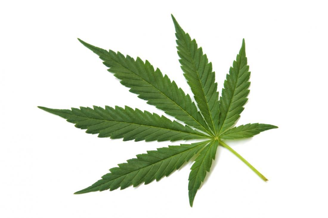 Конопля и клык как бороться с курящим марихуану