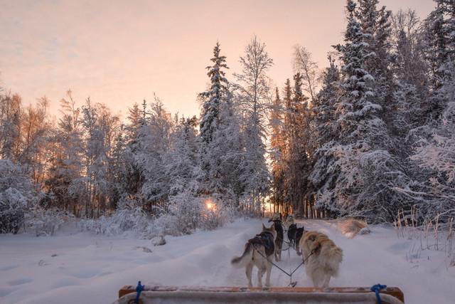 Alaska-Husky-Dog-Sledding-Tour