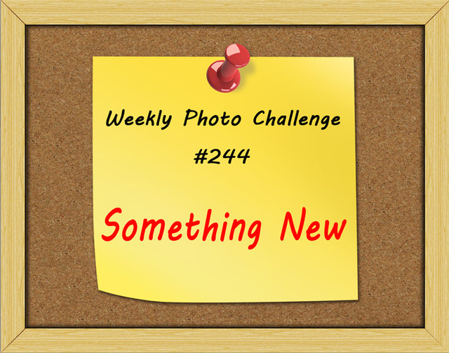 WPC-244-Something-New