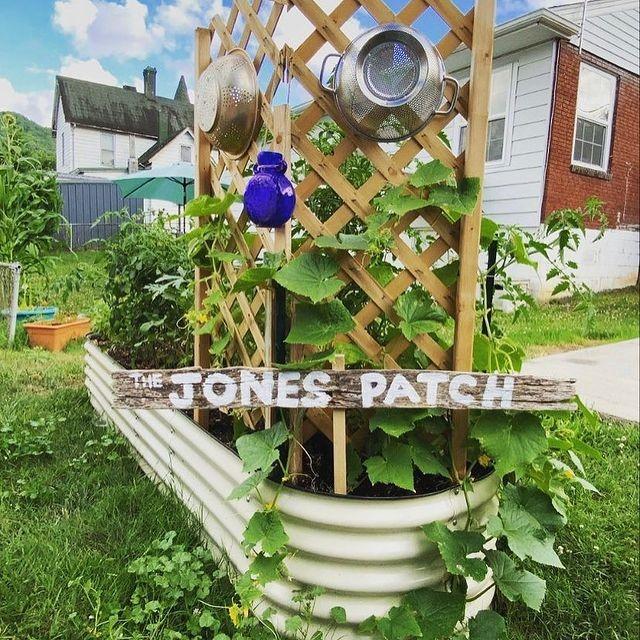 Raised Garden Beds for Easy Maintenance