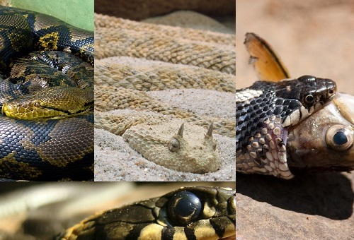 Amazing interesting facts related to snakes