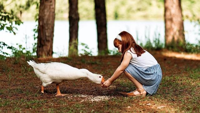 Bagaiman cara menjaga Kesehatan saat Kita berada di sekitar Hewan?