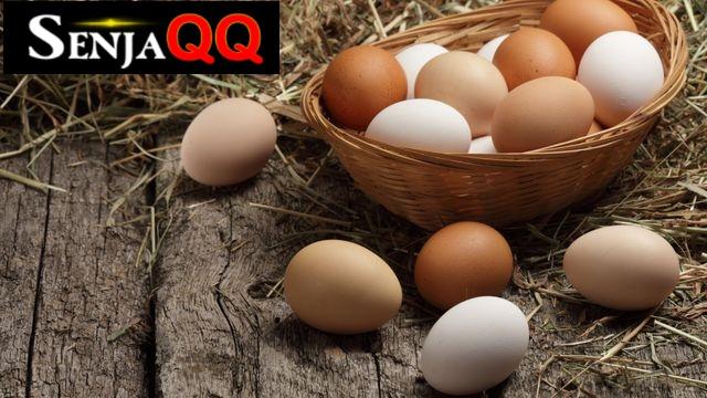 Perbedaan Jenis Telur Ayam yang Perlu Diketahui dan Manfaatnya