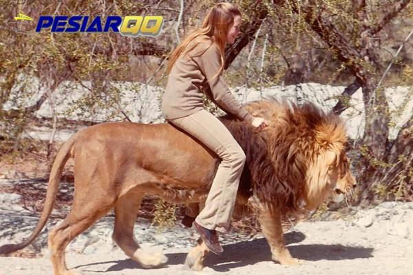 7 Hewan Ini Tak Disangka Pernah jadi Alat Transportasi dalam Sejarah
