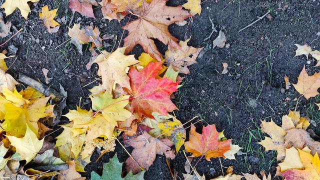 И Осень тихою вдовой