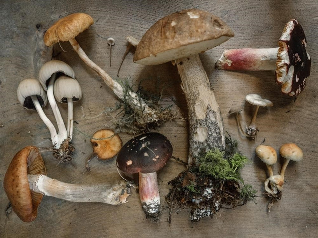 flat lay photography of mushrooms