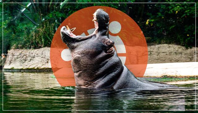 hippo-thumb