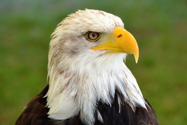 111 Bird of Prey