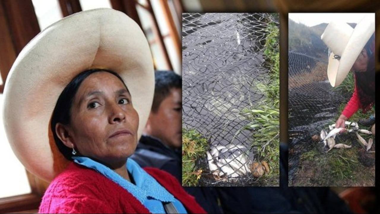 Denuncian envenenamiento a más de mil truchas de la familia de Máxima Acuña