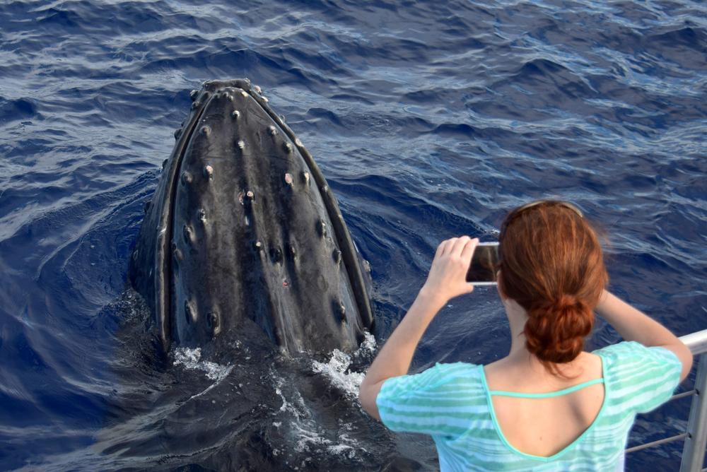 Whale-Maui