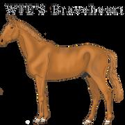WTE-s-Braveheart-20200911181737