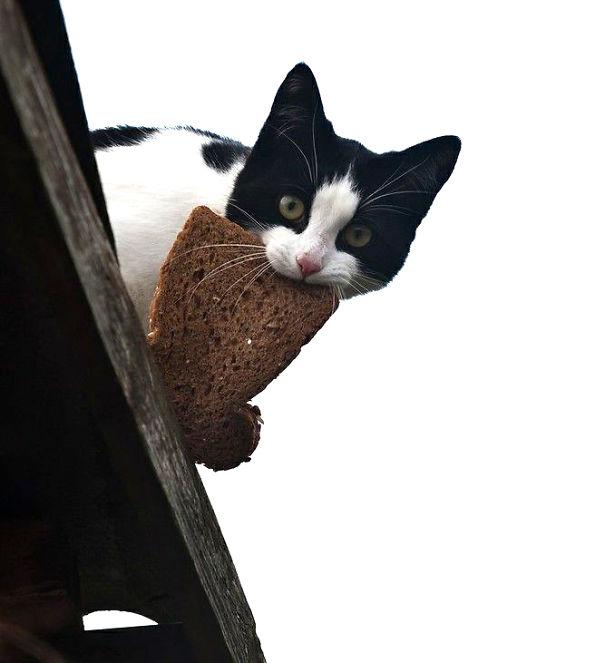Коты, которых поймали на горячем - 45 отчаянных фотографий - 25