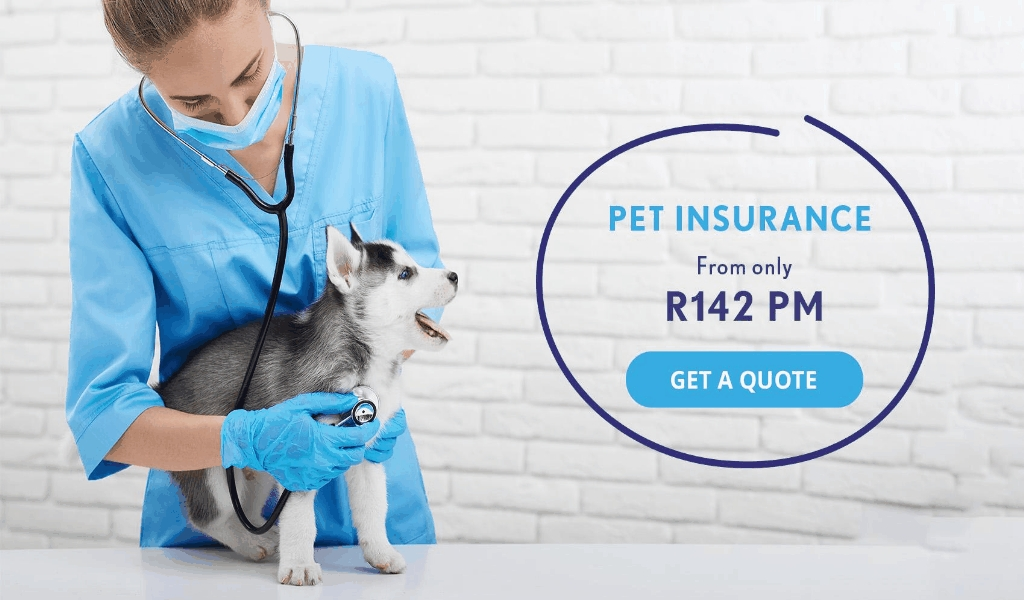 Best Pet Insurance By Royalty Company