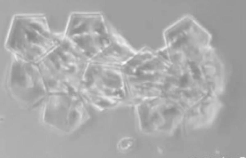 Самые микроскопические вещи из всех когда-либо созданных