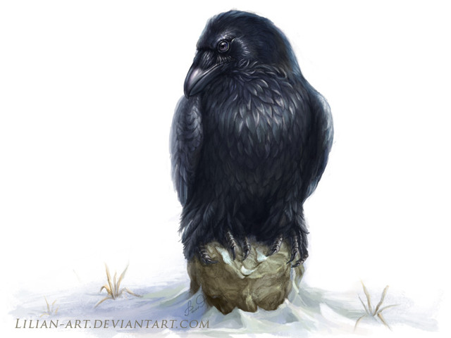 Raven-4.jpg