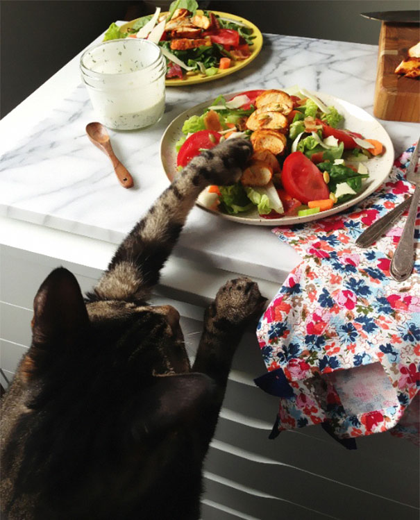 Коты, которых поймали на горячем - 45 отчаянных фотографий - 28