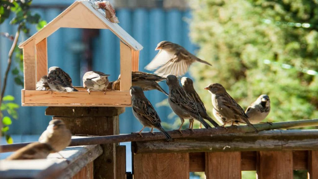 Bird Feeders: Which is the Best of 2021?