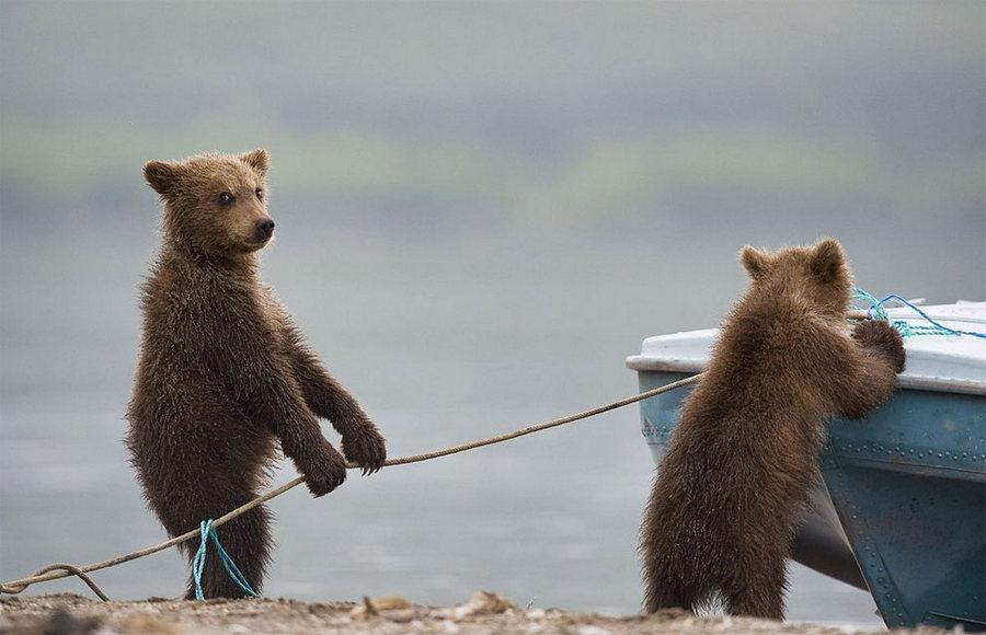 Невероятные фотографии медведей 8