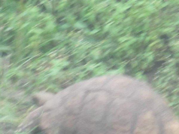 Черепаха социофоб развивает скорость