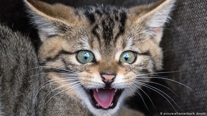 تفسير رؤية القطة في المنام 2020 دلالات ومعنى القطط السوداء في الحلم 1.jpg