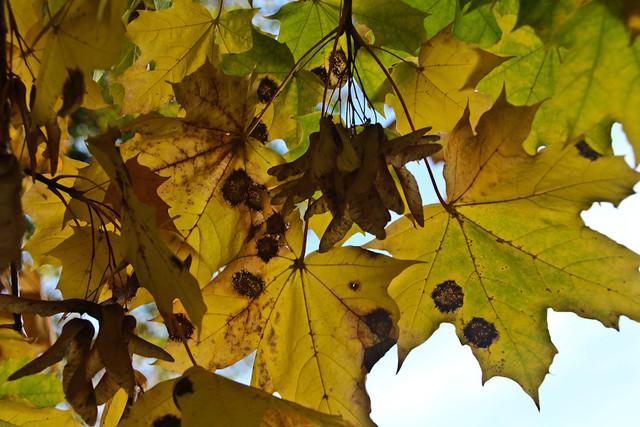 Sortavala-October-2011-123.jpg
