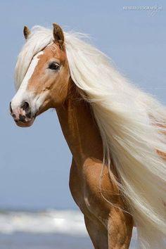 d13192ed5fe8daa5b1415c28200d7d68-braided-hair-a-beautiful