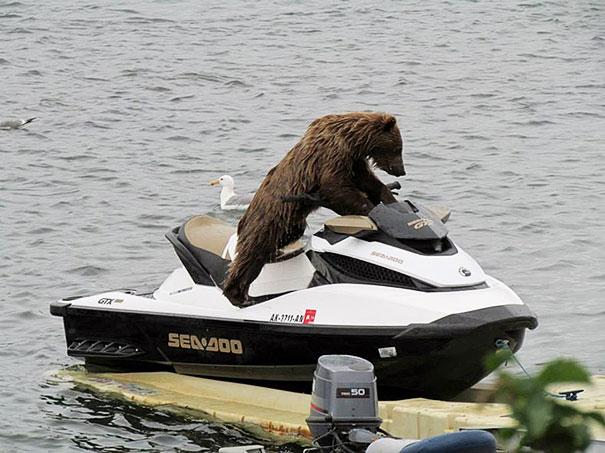 Медведи, такие медведи-27