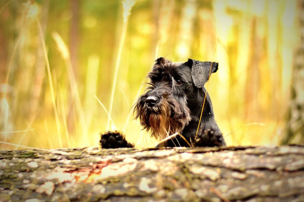 What to do if your dog is afraid of strangers?