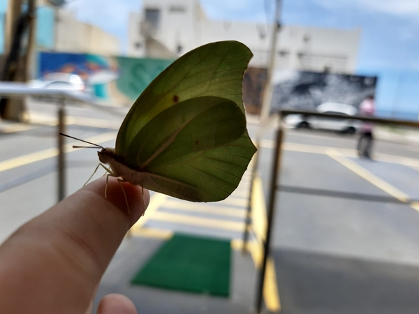 borboleta1