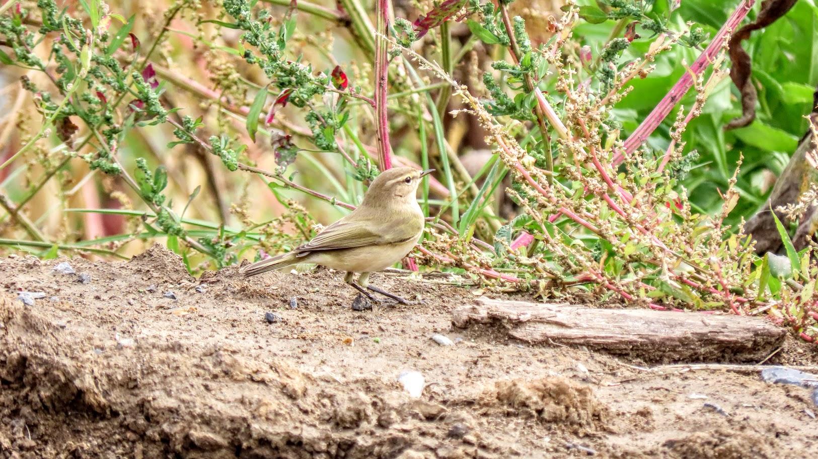 Зеленоглазый и птички 35846435