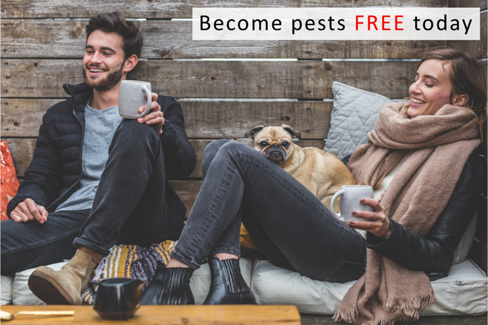 Pest-Control-buget-tips.png