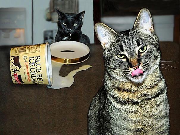 Коты, которых поймали на горячем - 45 отчаянных фотографий - 22