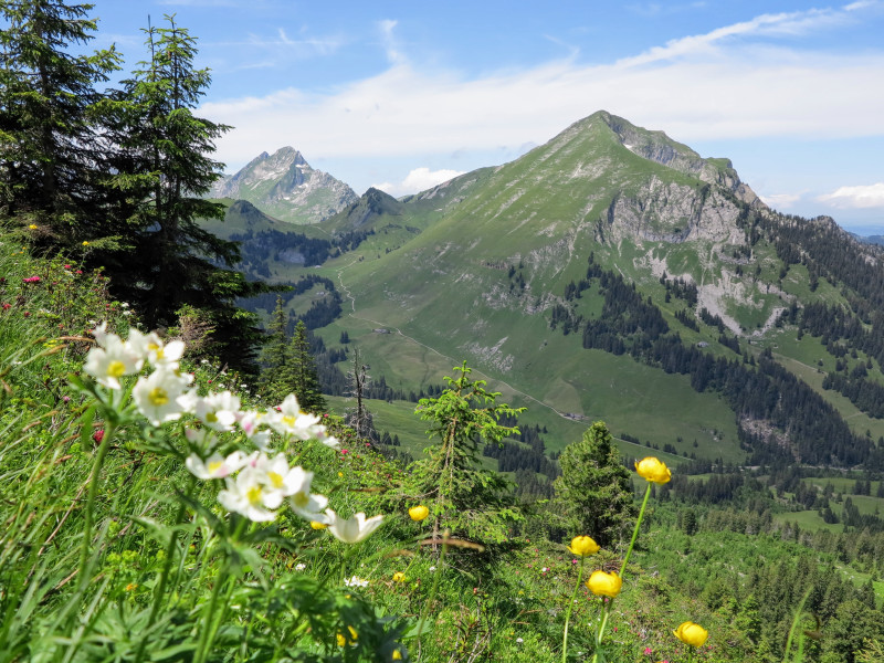 Flowers and valley