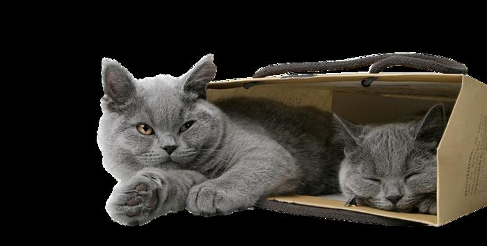 61692675-Saphiere-Graphic-Dream-Tubes-Cat-41