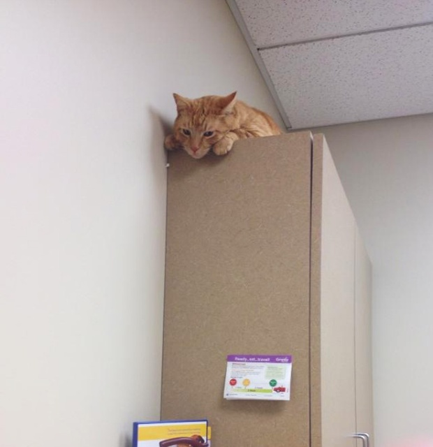 funny-cat-at-the-vet-08