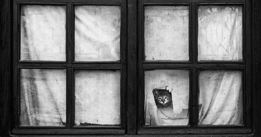 Таинственная кошачья жизнь в чёрно-белых фотографиях-12