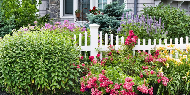 7 Types of Outdoor Ornamental Plants to Beautify the Garden