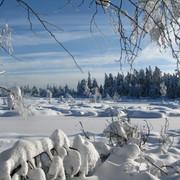 Winterwald-Wintermoor