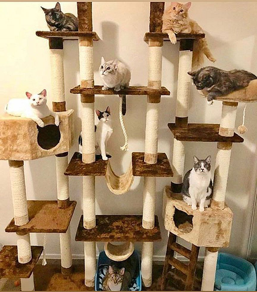 The Importance of a Cat Tree
