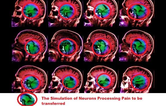 colored-mri-brain-scan.jpg