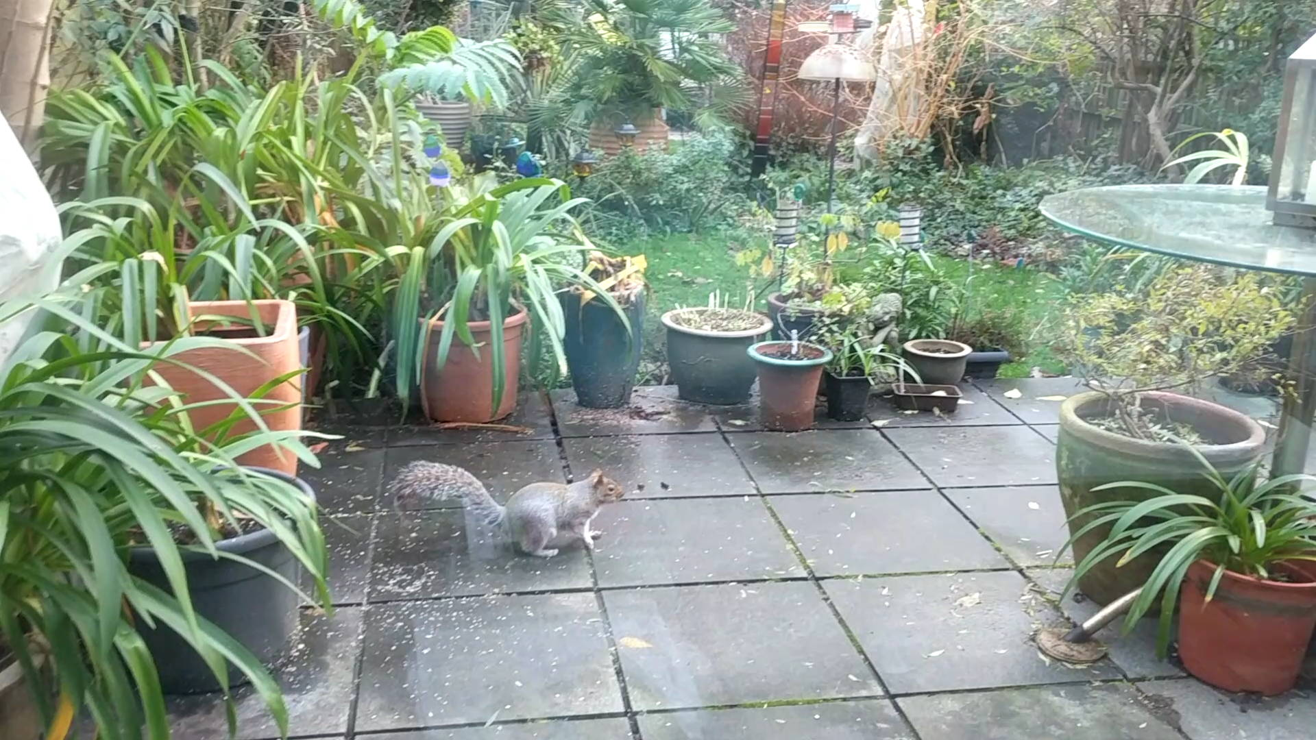 Got a squirrel visitor on our first Sunday morning in England 我们在英格兰的第一个周日早上看见一只松鼠