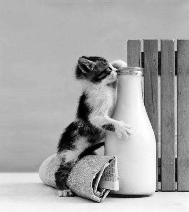 Коты, которых поймали на горячем - 45 отчаянных фотографий - 18