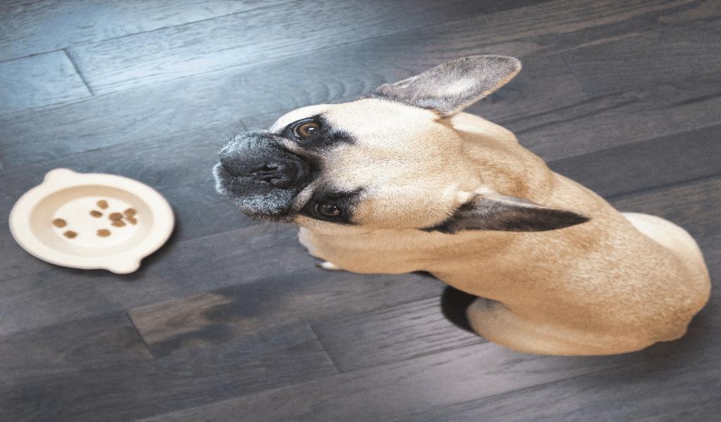 Odd stuff Pet Food World
