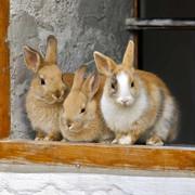 Kaninchenstall-header