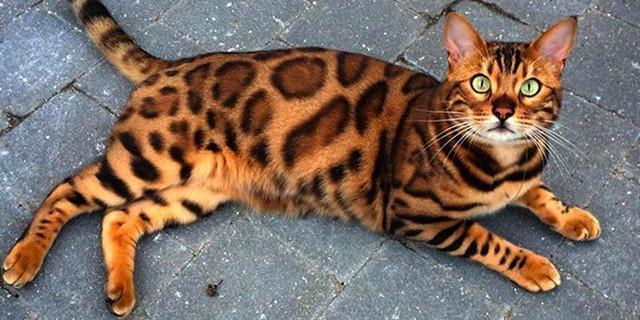Merawat Peliharaan Kucing Dengan Kasih Sayang