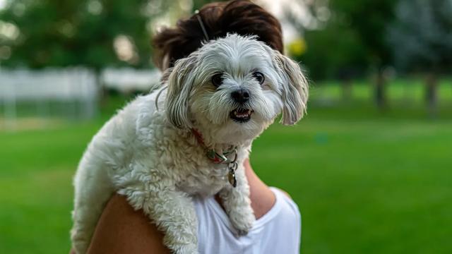 человек и собака