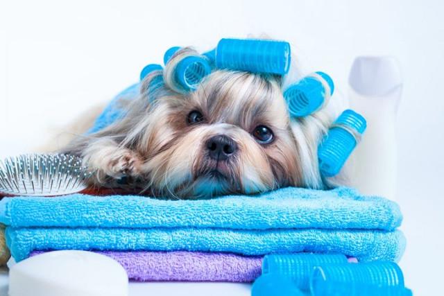 Pet-after-bath