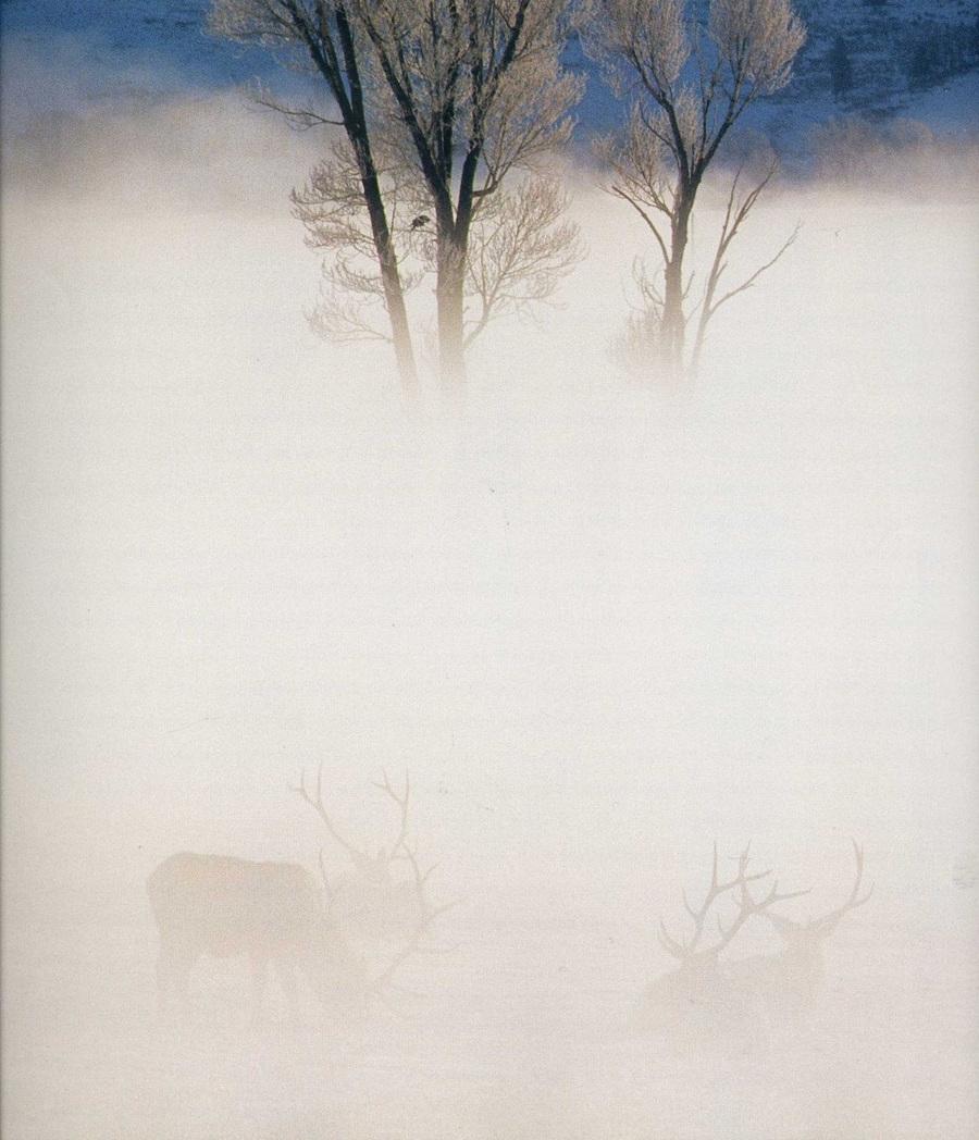 fotografii National Geographic 74
