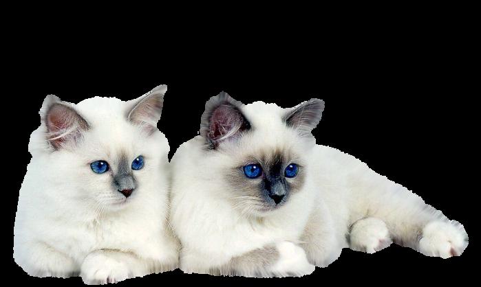 61692749-Saphiere-Graphic-Dream-Tubes-Cat-118