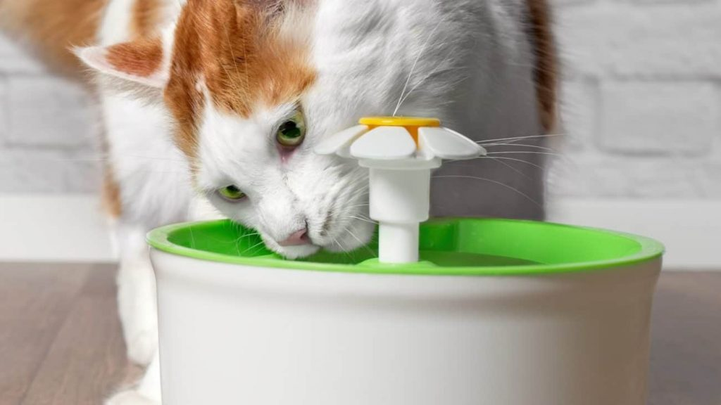Cat Fountain: Which is the Best of 2021?